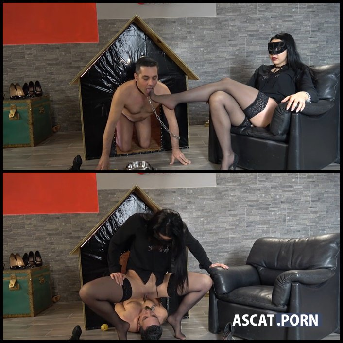 SCAT IN HIS DOGHOUSE - MISTRESS GAIA - femdom scat, shitting, toilet slavery, Full HD 1080p (Release Date: March 08, 2017)
